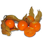 Physalis_fruit_2